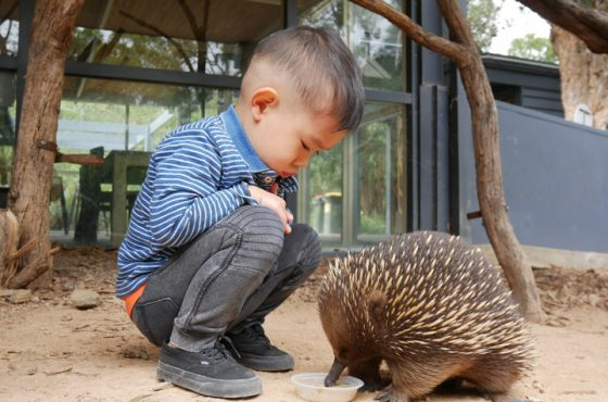 Top 10 Things To Do In Melbourne For Kids