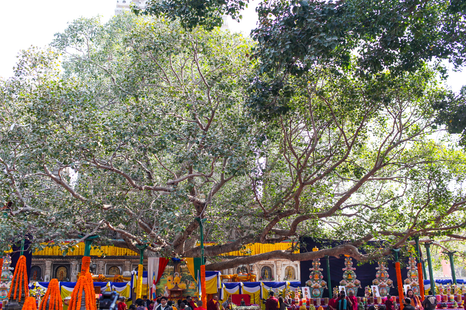 mystical-destinations-bodhi-tree
