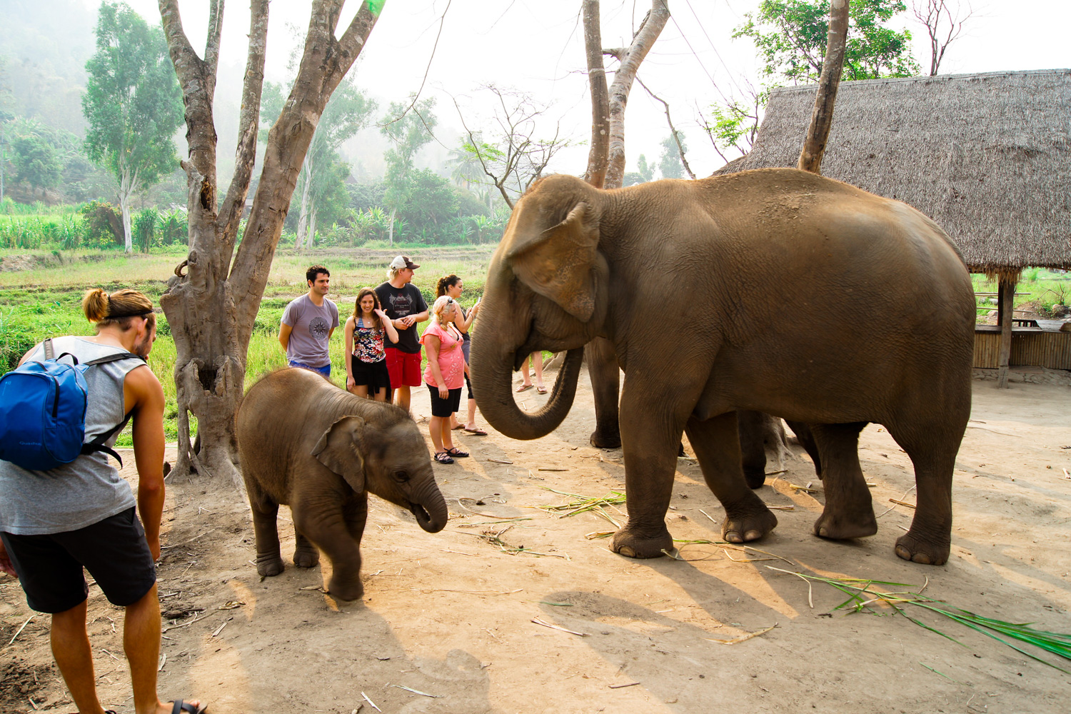 elephant-jungle-sanctuary-chiang-mai