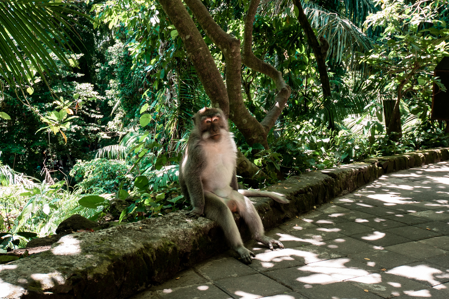 monkey-forest-bali-prices