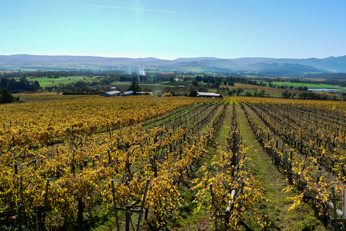 yarra-valley-melbourne-day-tour-itinerary