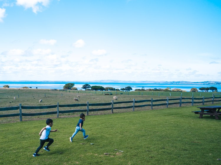phillip-island-nature-parks-churchill