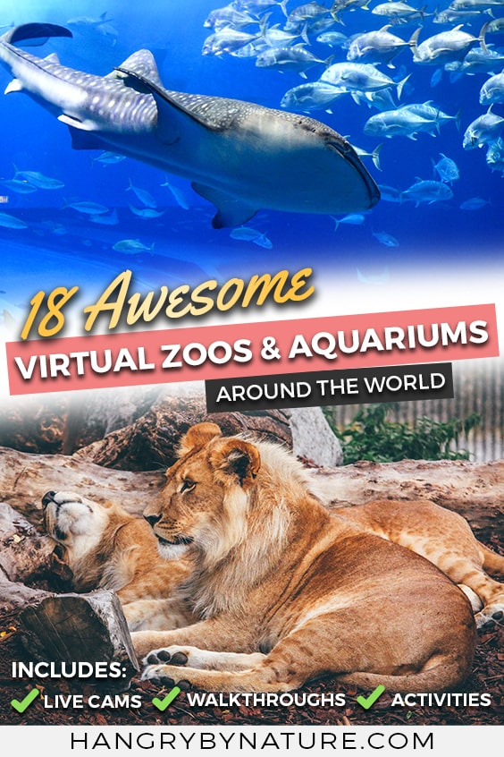 virtual-zoo-tour-aquarium