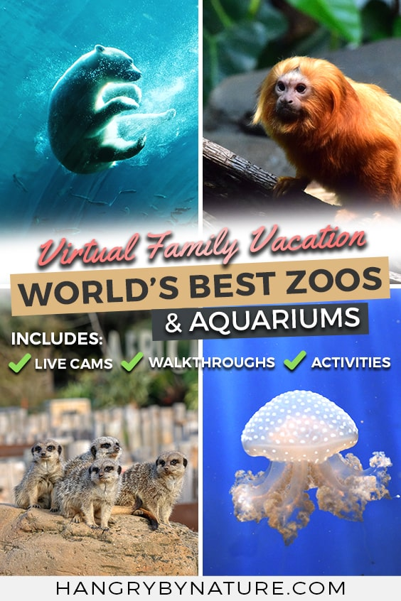 virtual-aquarium-tour-zoo