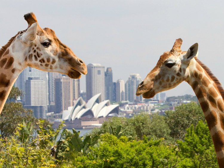 virtual-zoo-tours-sydney